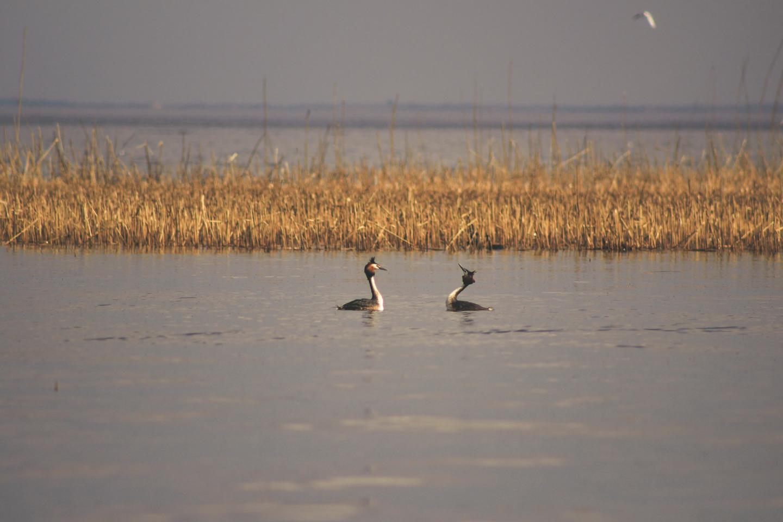 ptaki nad jeziorem mazurskim